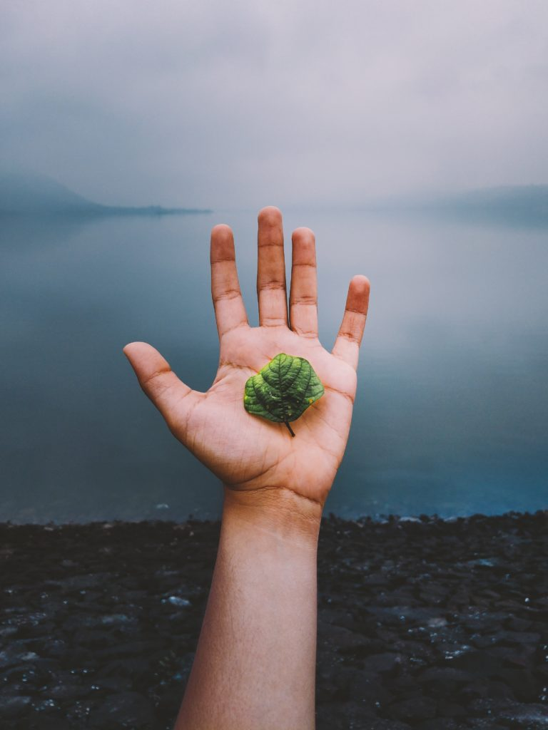 Photo of a left hand with light brown skin holding a small green leaf. Beyond the hand are rocky stones of a lakeside shore. Beyond that is a calm grey lake with fog obscuring the horizon. Photo credit to Bhai Rankar of Unsplash, shared with a creative commons license: https://unsplash.com/photos/-AqJCy1-Nrc